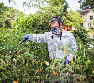 Man spraying treatment on plants
