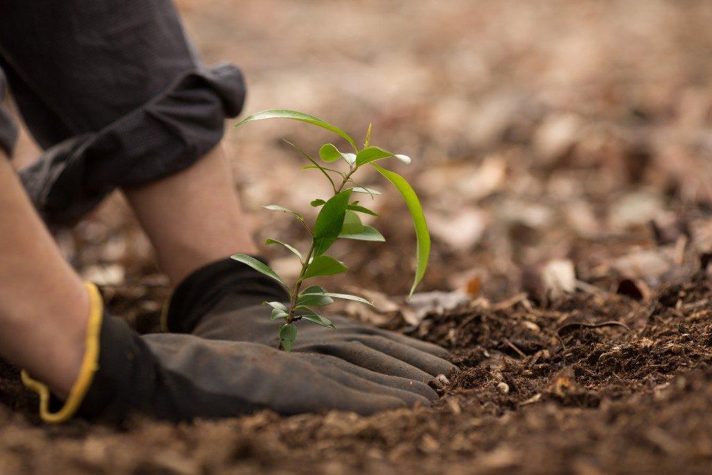 person gardening plants