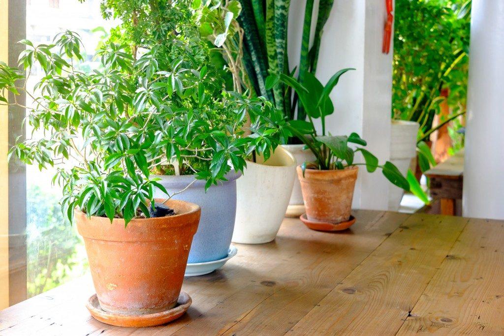 Succulent plants indoor