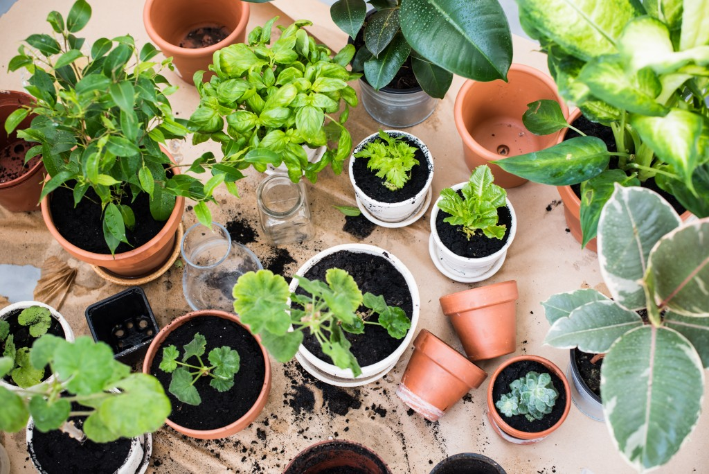 plants in small pots